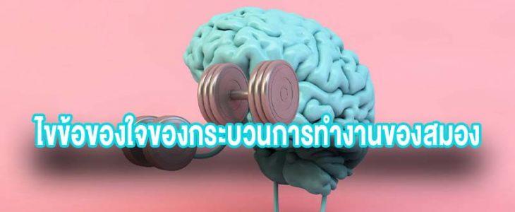 ไขข้อของใจของกระบวนการทำงานของสมอง